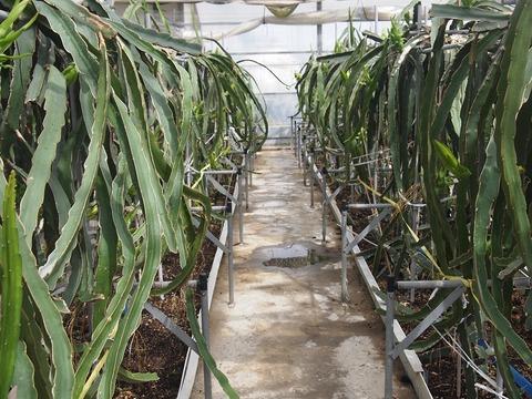 つぼみ温室