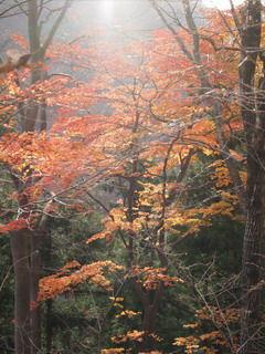 晩秋の軽井沢