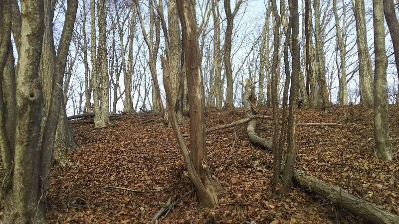 森のリース