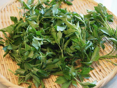 春の山菜のお料理