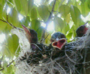 テラスの野鳥