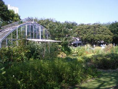 東邦大学の薬草園