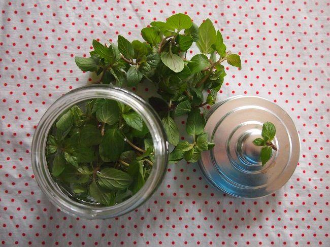 サロンのアロマ~バラの花びらのマッサージと ミントの消毒剤
