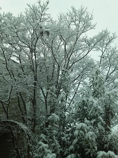 冬が来ましたね