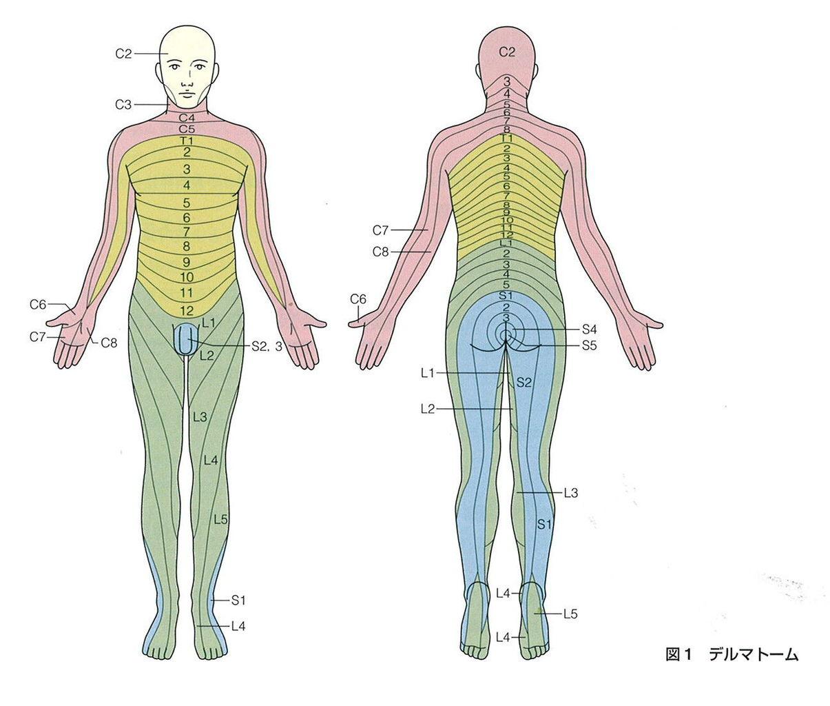 腱 反射 評価
