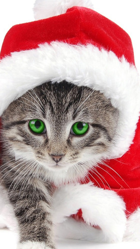 Christmas Cat iPhone 6 Wallpapers