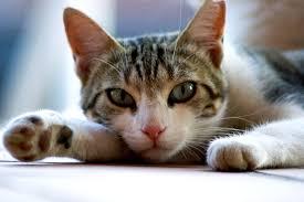 【朗報】人もネコも一緒に食べられる缶詰キタ━━━━゚∀゚━━━━