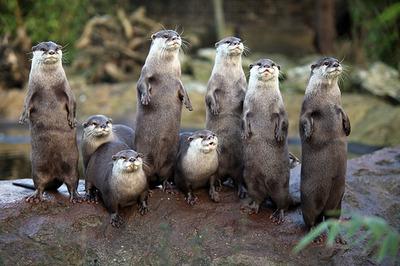 london-zoo-otter2