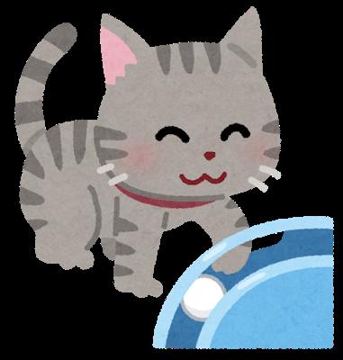 【癒やし】ノルウェー国営放送が全世界にネコ動画を無料提供