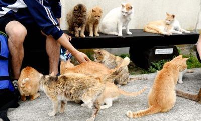 ネコの島「青島」 島内全ての猫に不妊・去勢手術
