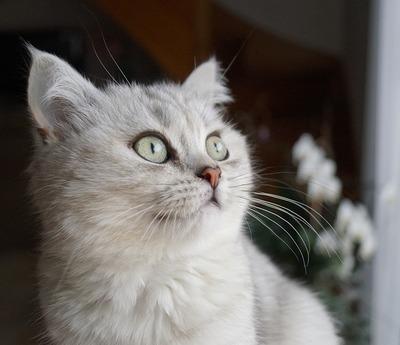 猫飼おうとしたらクソ高くて草