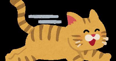 【悲報】飼い猫、消える
