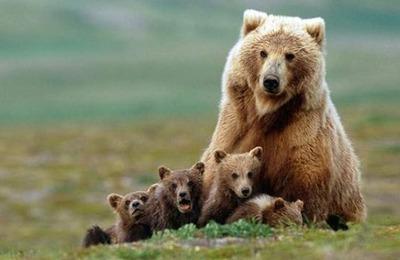 【こわE】3頭の熊に出会した84歳、傘を広げて威嚇したら襲われ怪我