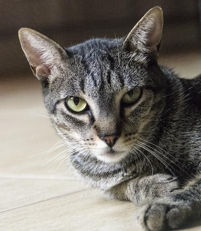 cat-1208510_960_720