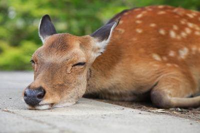 奈良公園の鹿3632534