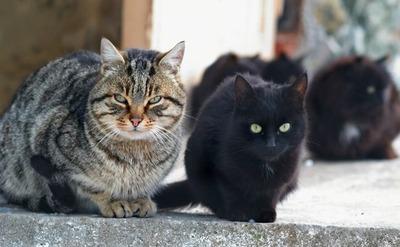 【こわE】野良猫のエサやり、注意されたことに立腹し女性をくわで殴る…男に懲役6年