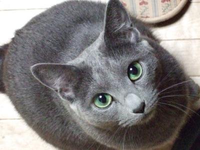 cat555