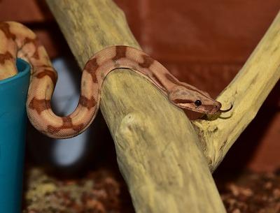 snake-1093768_960_720