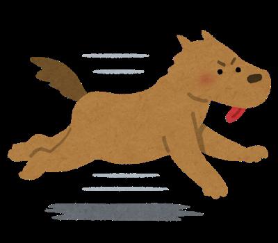 run_dog