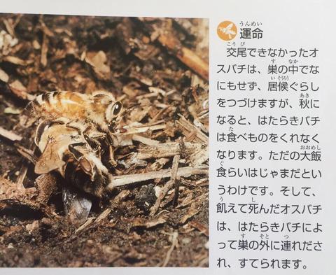 SnapCrab_NoName_2018-9-25_15-10-7_No-00