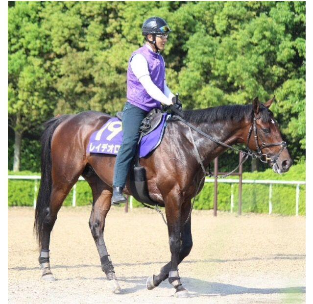 【日本ダービー】レイデオロは坂路で最終追い切りに備える 2週連続でルメールが騎乗予定