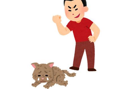 猫が猫に軽く顔パンチしたら顔パンチをされた猫が物凄い表情をしてしまう  [173238122]->画像>36枚