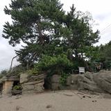 雨晴海岸 義経岩