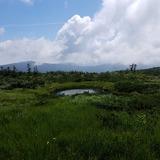 大凹の湿原
