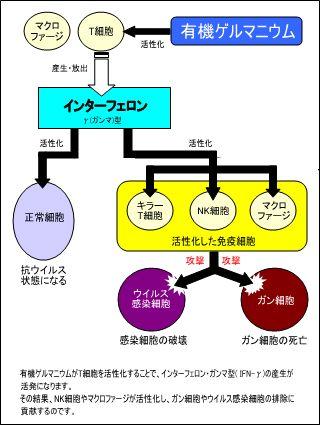 薬理作用イメージ図