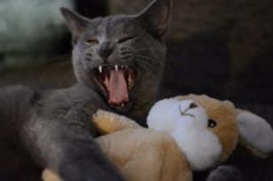 cat-2528930_640 (1)-min