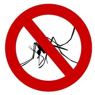 mosquito-1465062_640-min