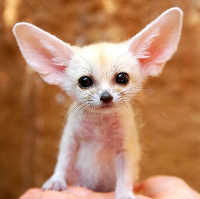 可愛い 世界 動物 一