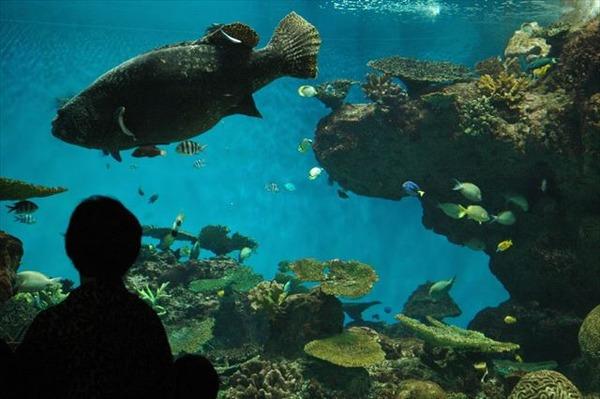 Kagoshima_Aquarium_-July_2009_a_R