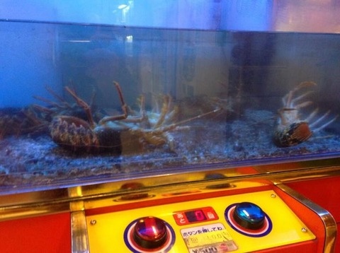 all-dead-lobster-ufo-catcher2