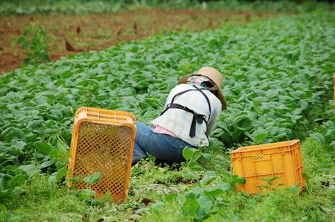 農家の嫁2