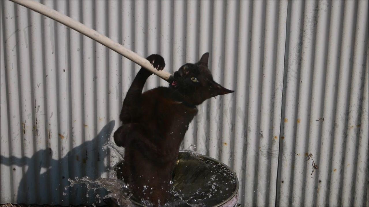 猫に熱湯を掛けたりバーナーで炙ったりして○した動画を投稿していた税理士の男逮捕…2ちゃんねるの虐待マニアから「神」と呼ばれる★11 [無断転載禁止]©2ch.netYouTube動画>8本 ->画像>91枚