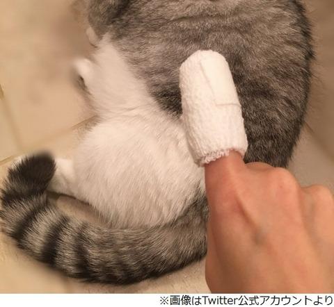 指原莉乃さん、指のケガの状態明かすも原因は明かさずwwwwwww