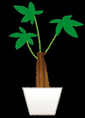 plant_pakira