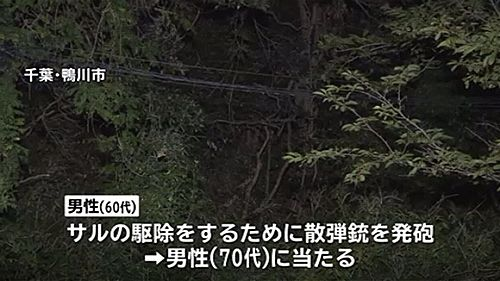 【千葉鴨川】サルと間違え散弾銃発砲、弾あたり70代男性死亡=男「サルに向け撃った」