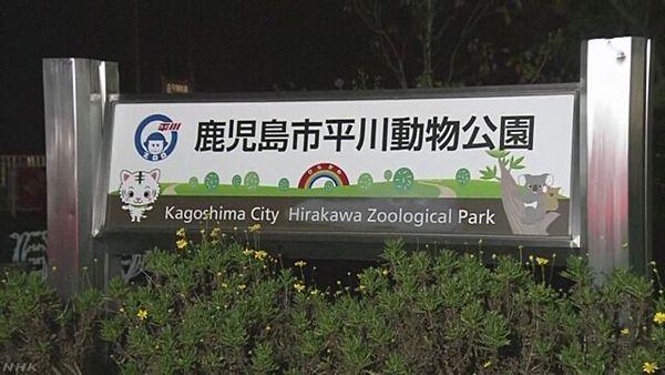 【鹿児島】平川動物公園、ホワイトタイガーに襲われた飼育員死亡