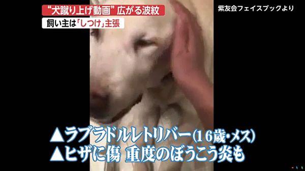 【老犬虐待動画】飼い主の女は「躾」主張2