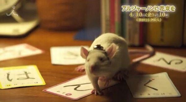 【TBS・アルジャーノンに花束を】番宣動画に謎の『は・ん・ぐ・る』 「サブリミナルか」とネットで話題=プロデューサーは韓哲氏