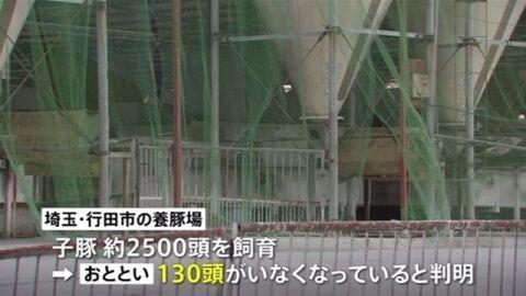 【食肉闇ルート】埼玉行田で子豚約130頭盗難 北関東で相次ぐ盗難事件と関連か=ネットに子豚の丸焼き写真や外国語の書き込み