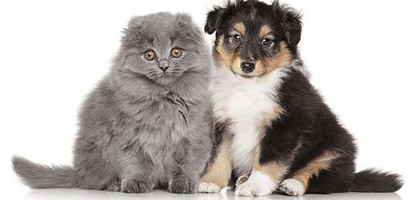 【子犬・子猫販売禁止】英政府、悪質業者(「パピーファーム(子犬工場)」)排除へ=生後6カ月未満