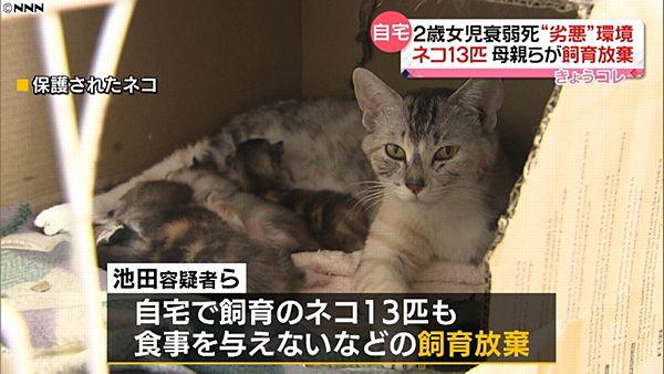 【札幌女児虐待事件】飼い猫13匹も飼育放棄 男の自宅でも8匹=劣悪環境下で…