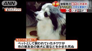 【千葉市原】チワワ、猟友会の猟犬に噛み殺される 飼い主「大切な家族…何の誠意も見られない」