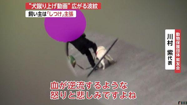 【京都・老犬虐待動画】飼い主の女は「躾」主張 ネット「この女こそ躾が必要」=犬は動物保護団体の女性が保護