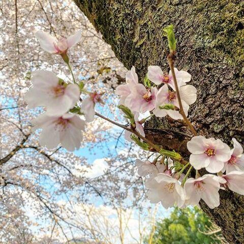 三吉彩花さん、15日ぶりのインスタ更新「整理しながら過ごしていました」