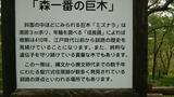 武佐の森2