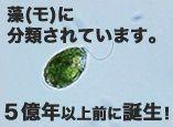 img01_1